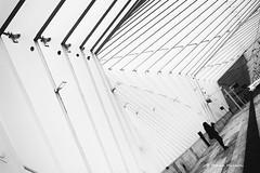 (Monica Muzzioli) Tags: mediopadana av bw blackandwhite station train people silhouette architecture white calatrava lines geometry patterns contrast