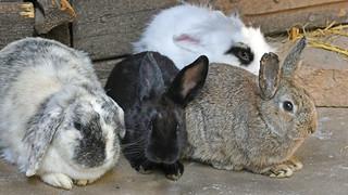 die Arbeit ist erledigt, Ostern kann kommen!  -  work is done, Easter can arrive!