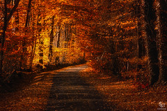 The Way through Autumn Trees (SeSonnen) Tags: baum herbst laub münsterland natur strase tree autumn nature leaves road germany deutschland