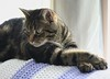 Throwback Buckley: Chill (~ Liberty Images) Tags: pet animal critter buckley tabby cat feline