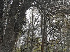 Trees In A Wooded Area. (dccradio) Tags: whiteoak nc northcarolina bladencounty outdoors outside harmonyhall harmonyhallplantation museum park sky