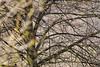 spring scene (kazimierz.pietruszewski) Tags: spring light branches tree vibration pictorial pictorialism