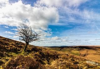 Dartmoor National Park, England