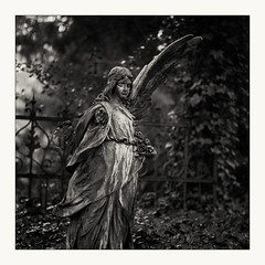 Fallen Angel (Andre Kurenbach) Tags: 6x6 fp4 ilford rodinal zenzabronica film zenzanons 150mm cemetery graveyard dark sad sadness angel sculpture sqa