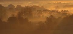Lumières du matin (didier.bier) Tags: canon eos 80d 70200mmf28isusmii matin aurore lumière brouillard rochefortsurnenon bourgognefranchecomté franchecomté jura 39 france arbre