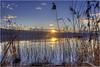 Sunset Sempachersee (Hanspeter Ryser) Tags: sempach sunset sempachersee sonne schilf wasser see lake abend centralschweiz blau gelb wolken schweiz switzerland stern