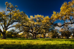 Spring time in Biloxi, Mississipi. (vovopics) Tags: sping mississippi biloxi gulfofmexico hwy90 trees