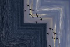 confused birds (sumnerbuck) Tags: keywest florida sky photoshop water flickrdiamond diamondclassphotographer