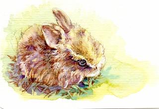 Dwarf Rabbit -Postcards for the Lunchbag