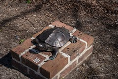 DSC_5173 (Copy) (pandjt) Tags: roadtrip unitedstates usa southcarolina conway conwaysc riverwalkpark riverwalk park boardwalk bronzesculpture sculpture publicart timmytheturtle erinryan turtle
