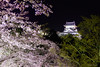 Cherry blossom at night with Inuyama castle (稲垣一志) Tags: 桜 夜桜 犬山城 国宝 満開 春 夜 ライトアップ 犬山市 愛知県 日本 cherryblossom cherryblossomatnight inuyamacastle nationaltreasure fullbloom spring night illumination inuyamacity aichipref japan