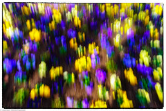 ICM - Blumenbeet (J.Weyerhäuser) Tags: icm blumenbeet blumen intentionalcameramovement abstract experimental colors