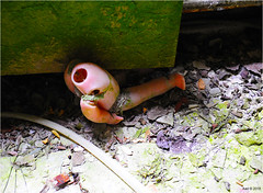 In a Pripyat Children's Nursery (Aad P.) Tags: chernobyl чорнобиль pripyat припять ukraine україна sovietunion cccp urbex urbexphotography exclusionzone children toy puppet childrensnursery radioactivity radiation nuclearpowerplant