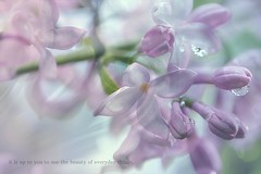 DAY 99. It is up to you . . . (Small and Beautiful) Tags: lilac drop words spring beautiful everyday beauty pastel pink smallandbeautiful bokeh