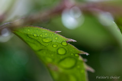 IMGP7353 (Nature Photo with PENTAX) Tags: green macro leaf plant nature water waterdrop bokh tamron pentax 水玉 自然 ペンタックス タムロン マクロ