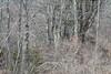 Le conseil (Mylene Gauthier) Tags: 2018 arbre couleur cozycorners espacesboisés gris maine mars mylenegauthier nikond7100 paletteprintanière paysagepolychrome printemps texture étatsunis