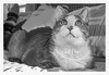 What's it all about... (Timothy Valentine) Tags: blackandwhite 2018 catloaf quinnomannion happycaturday 0318 home meditation eastbridgewater massachusetts unitedstates us