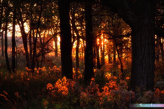 Autumn Sunset Glow *A Beautiful Nature*
