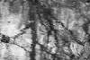 spring rains (RubyT (off to see kids & grandkids)) Tags: olympusomde10ii mzuiko75300 черноеибелое bw nb bn reflection mono monocromo monochrome rain trees water lake blackandwhite schwarzweiss noirblanc blancoynegro abstract