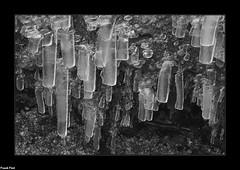 Lames de glace - Rochanon - Bolandoz (francky25) Tags: lames de glace rochanon bolandoz noir et blanc franchecomté doubs fin lhiver