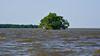 negombo rivière et magroves (ver-20100) Tags: srilanka asia nature nikon nikond750 negombo mangrove rivière river