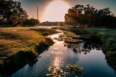 Evening stream (MJ6606) Tags: flowersplants spring park landscape evening florida nature trees sunset river sky lily water