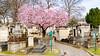 Springtime (L'Abominable Homme de Rires) Tags: paris pèrelachaise cimetière tombe springtime canon5d 5dmkiii sigma 24105mmf4 couleur dxo photolab lightroom landscape