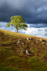 Tree on a Hill (Kirk Lougheed) Tags: california santaclaracounty sierravista sierravistaopenspacepreserve usa unitedstates cloud hill landscape oak outdoor sky spring tree