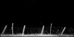 Neuville sur Sarthe (Sarthe) (gondardphilippe) Tags: neuvillesursarthe sarthe maine paysdelaloire noiretblanc nature blackandwhite bw monochrome pieux noir blanc zen extérieur