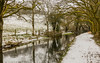 Snowy Cattle Fence (trevorhicks) Tags: tavistock devon canal fence farm field grass tree water snow winter ice canon 5d mark iv tamron refections dog branches leaves outdoor
