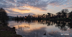 Last Flash at Shobrooke (macdad1948) Tags: pond geese water birds shobrooke crediton sunset devon shobrookepark reflections ripples