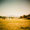 Strawberry field (aprilpo) Tags: travel dianamini crossprocessing xpro lomography japan kyushu asia strawberry strawberryfield fukuoka e2c etoc analog slide farmland 福岡 九州 日本