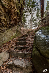 The Stairs Up 2 (kschmitz2) Tags: stone leaves moss canoneos5dmk3 tree ef1635mmf28lii state stair carter caves rock kentucky park wet olivehill unitedstates us