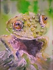 Tree frog (sushipulla) Tags: frog frogs treefrog vietnamesetreefrog nature endangeredspecies watercolours watercolors sketchbook sketch sketching