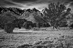 Around Mount Whitney, California (thedot_ru) Tags: mountains landscape trees grass clouds sky monochrome blackandwhite bw california mountwhitney canon5d 2010 usa unitedstates us america