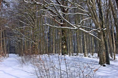 Winterliche Granitz