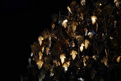 Tree Of gold (Deepgreen2009) Tags: ornament home golden tree leaves delicate sunlight contrast light shade dark