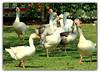 Aves no parque (o.dirce) Tags: aves parque odirce