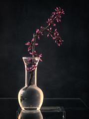 Still life with redbud (Anne Worner) Tags: anneworner plant vase stilllife floral redbud texture layers condensation water