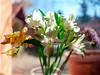 Flowers in spring sunlight (Raoul Pop) Tags: flowers windowsill