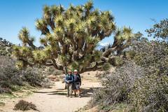 (J F Schacht) Tags: 2018winter california chris hiking hikingtrails jim joshuatreenationalpark panoramaloop travel usa what when where who why wintervacation2018