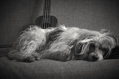 Day52 (a_salnikova) Tags: 365project 365 dog bw canon550 manualfocus helios44m oldlens chinesecristatedog