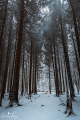 The Warren (geraintparry) Tags: uk landscape light nikond500 d500 nikon nature caerphilly south wales outdoor morning wood woods forest tree trees warren woodland woodlands geraint parry geraintparry snow