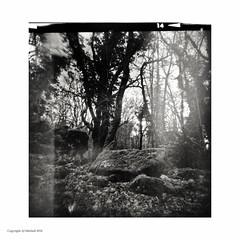 Dolmen du Causse du Prunier (AJ Mitchell) Tags: holga dolmen megalith ilforddelta3200 120film quercy plasticlens moss forest wood bw blackandwhite lofi lomo lomography