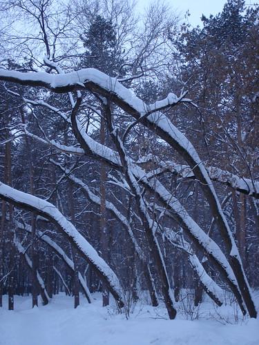 Деревья под снегом ©  ayampolsky