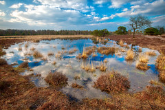 Loving Nature.... (Karel Warburg) Tags: leersumseplassen utrechtseheuvelrug canon50d sigma1020mm35 leepolariser neendsoftgrad09 nature pond trees tree water reflections spiegeling