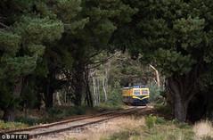 Canopy (Dobpics O'Brien) Tags: 91rm walker rail railway railways railcar train diesel daylesford dscr spa country victorian victoria vr branchline musk bullarto