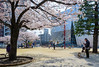 Exterior view of The Sumida Hokusai Museum (すみだ北斎美術館) (christinayan01 (busy)) Tags: sanaa kazuyo sejima architecture museum building perspective tokyo japan blossom cherry sakura