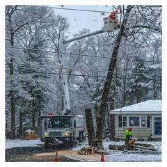Tree Work (Timothy Valentine) Tags: 2018 tree large people 0418 snow eastbridgewater massachusetts unitedstates us