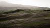Val D'Orcia - Righi nel campo (.nyko) Tags: valdorcia toscana nikondf nikon colline pioggia campo